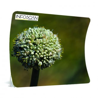 Ritswand-arch-bloem-Infoscan